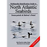 Storm-petrels and Bulwer's Petrel (North Atlantic Seabirds)by Robert L. Flood
