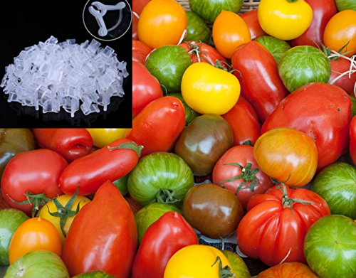 tomato-cherry-rainbow-mix-seeds-colourful-and-flavourful-mixture