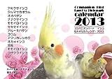 コンパニオンバード インコ 鳥A4写真カレンダー2013