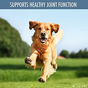 Nutritional Supplements for Dogs Joints and Hips Health - Organic, Easy To Use Powder, 140-Dose Jar with Mess-Free Shaker Top - by Natural Rapport from Natural Rapport