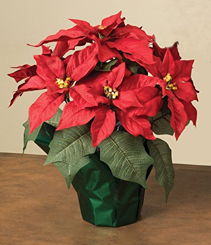 """15"""" Potted Red Poinsettia Plant with 7 Flowers"""