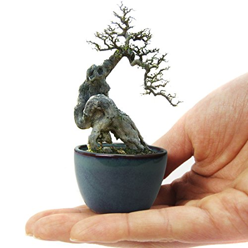happy bonsai 12 mini glazed pots new ebay. Black Bedroom Furniture Sets. Home Design Ideas