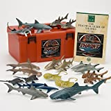 立体図鑑リアルフィギュアボックス シャーク (サメの仲間)