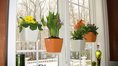 Window garden aquaphoric planter kit self watering planter attaches to your window with the - Houseplants thrive low light youre window sill ...