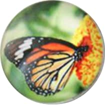 Chunk Snap Charm Butterfly Glass Cover 18 mm