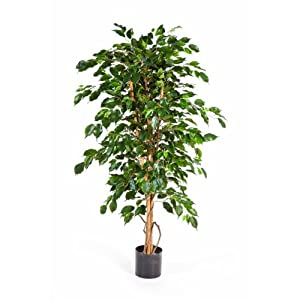 ficus exotica artificiel en pot 1760 feuilles vert 210 cm ficus synth tique arbuste. Black Bedroom Furniture Sets. Home Design Ideas