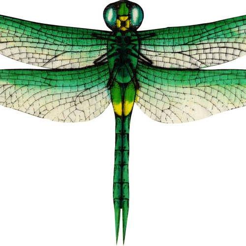 Silk Dragonfly