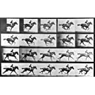 Horse in motion, photo Eadweard Muybridge (V&A Custom Print)