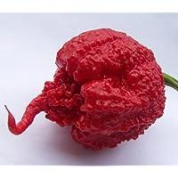 Carolina Reaper Pepper - 4 Plants - The Hottest Pepper in the World