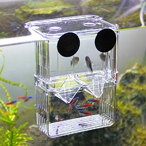 Pecute Sheer Fish Breeding Isolation Hanging Aquarium Large Incubator Box Tank Large