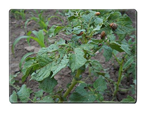 luxlady-placemat-potato-colorado-potato-beetle-natural-rubber-material-image-375232