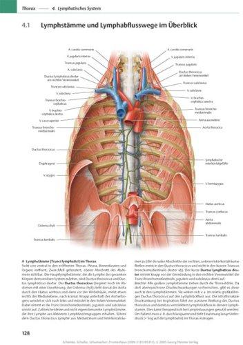PROMETHEUS Lernatlas der Anatomie. Hals und Innere Organe