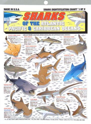 Shark Identification Chart for Pinterest Shark Species Chart