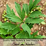 1,000 Herb Seeds, Lovage (Levisticum officinale) Seeds by Seed Needs