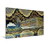 Premium Textil-Leinwand 120 cm x 80 cm quer, Gefährliche Schlangen -  Der Netzpython (2) | Wandbild, Bild auf Keilrahmen, Fertigbild auf echter ... und ewigem Leben. (CALVENDO Tiere)