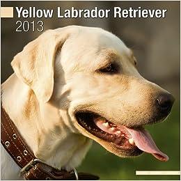 Labrador Retriever (Yellow) 2013 Wall Calendar #10050-13 ...