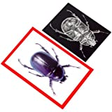 Roylco, Inc. Insect X-Ray and Picture Cards