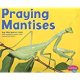 Praying Mantises (Bugs, Bugs, Bugs!)