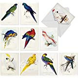 M6034 Birds Of A Feather: 10 Assorted Blank Note Cards W/Matching Envelopes.
