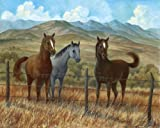 3 Appaloosa Sorrel and Paint Horse Art Prints/Pictures