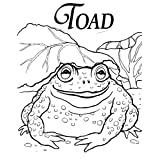 TOAD IN TOWN-New Experiences Children's Book (Life Skills Childrens eBooks Text-Only Version 26) ~ Linda Talley