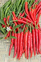 Go Green Chilli/Pepper Extra Hot G4- 2pkts each 50 Seeds
