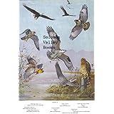 "7.5"" X 11"" Double-Sided 1955 Colour Plate, (American Birds) Hawks, Goshawk & Eagles, Hawks, Osprey , Vulture ~ Color Plate"