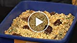 How to make a kitty litter cake for Halloween
