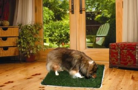 Pup-Head® Lite Flexible Dog Potty Regular Size 20