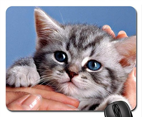 hand-blue-eyes-kitten-grey-cat-cute-animal-whiskas-mouse-pad-mousepad-cats-mouse-pad