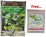SEED Seller: Precious Wrightia tinctoria Pala indigo Seeds: A Medicinal plant in Ayurveda, Beautiful Flowering Tree known as Dyers's oleander, Sweet Indrajao, Ivory wood, Duhi, Mitaindarjau Kapar, Danthapala (100 seeds)
