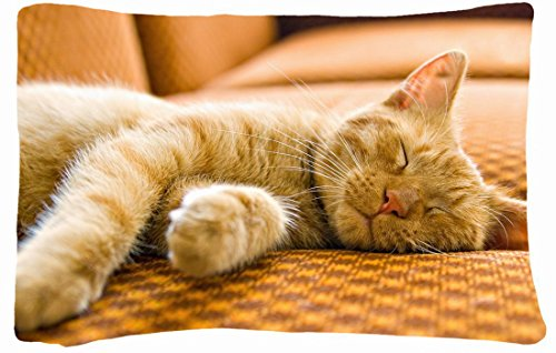 Best Couches For Cats front-374794