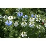 Love-in-a-Mist Nigella Mixed Colors Seeds