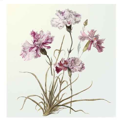 'Carnation Composition' - Stunning Limited Edition Giclee print from Artist Sher Rajah 30 x 30cm with quality mount 45 x 45 cm