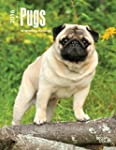 Pugs 2016  Weekly Engagement