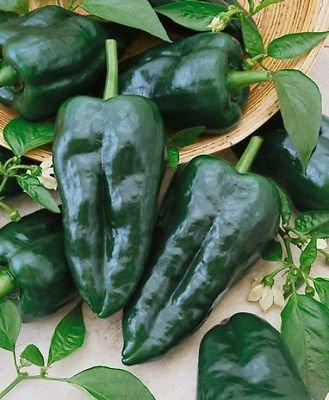 50+ Heirloom Hot Pepper Garden Seeds -