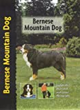 Louise Harper Bernese Mountain Dog (Petlove)