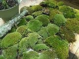 Appalachian Emporium's Super Mix Live Fresh Moss for Terrariums, Vivariums, Bath Mats, Garden, Flower Pots