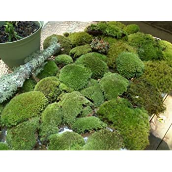 Appalachian Emporiums Super Mix Live Fresh Moss for Terrariums, Vivariums, Bath Mats, Garden, Flower Pots