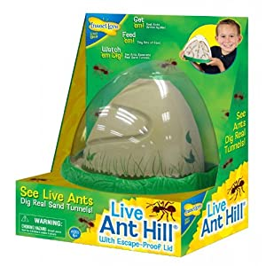 homemade ant farm instructions
