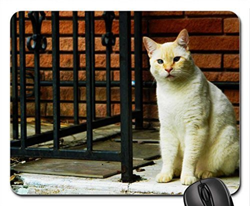 leonidas-my-chat-tapis-de-souris-tapis-de-souris-tapis-de-souris-chat