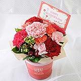 花由 母の日カーネーション フラワーアレンジメント(生花) 元気なレッド&ピンク【母の日 ギフト プレゼント】