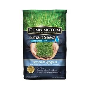 pennington 100086853 smart seed perennial rye blend