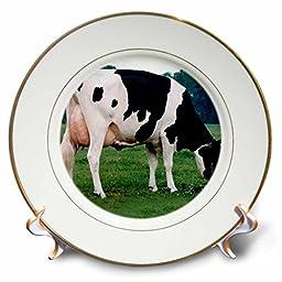 Farm Animals - Holstein Cow - 8 inch Porcelain Plate (cp_623_1)