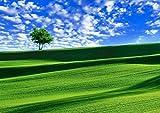 【A3サイズミニポスター】 丘と一本の木 POSA3-029 (42.0×29.7cm)