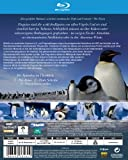 Image de Pinguine Hautnah [Blu-ray] [Import allemand]