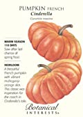Pumpkin French Cinderella Seed