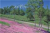 1000ピース 芝桜と羊蹄山 10-471
