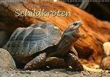 Schildkröten (Wandkalender 2015 DIN A2 quer): Schöne Fotos von Schildkröten zu Land und zu Wasser (Monatskalender, 14 Seiten)