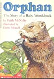 Orphan The Story of A Baby Woodchuck (0590438395) by MCNULTY, FAITH